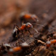ant up close